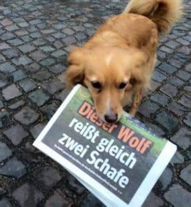 Runder Tisch Eimsbüttel gegen Hundehalter