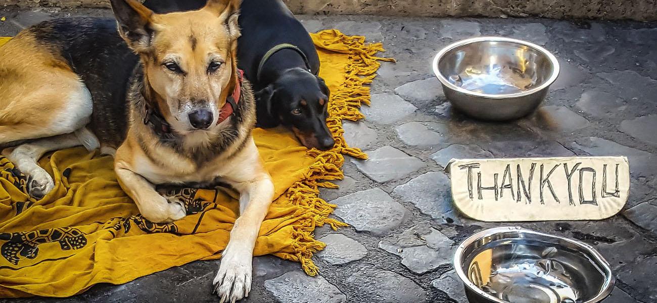 Hunden von Obdachlosen helfen, die Hunde-Lobby hilft.