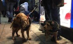 Obdachlose mit Hund am Gerhart-Hauptmann-Platz